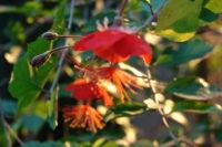 Detailaufnahme von drei Blüten