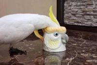 Ein Papagei bzw. Kakadu steckt seinen Kopf in eine Tasse. Die Tasse ist geformt wie der Kopf eines Kakadus. Dass der Kopf in der Tasse steckt, fällt erst beim genaueren Betrachten auf.