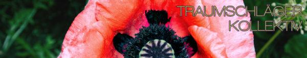 Detailaufnahme einer Mohnblüte. In der Mitte die typische Mohnkapsel mit grüner Hülle und violett-schwarzem Stern. Drum herum ein Kranz aus schwarzen Pollengefäßen (?) und außen intensiv rote Blätter, an den Rändern teils schon ins rosa verblassend.