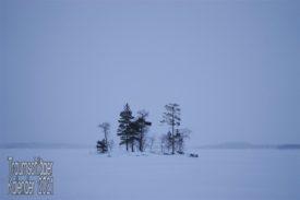 Landschaftsaufnahme. Es liegt Schnee, und es ist leicht neblig, fast das ganze BIld ist weiß, nur in der Bildmitte stehen 5 Bäume und ein paar Büsche. Die Laubgewächse sind kahl, zwei Tannen tragen ihre Nadeln. Im schwachen Tageslicht heben sich die Bäume nur schwarz gegen die Umwelt ab.